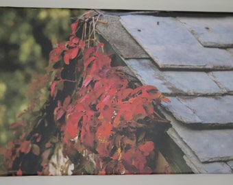 Canvas Photography Roof Vines