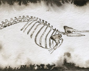 Narwhal Illustration Fine Art Print, Narwhal Skeleton, Bones Art, Unicorn of The Sea Painting, Narwahl Anatomy, Black & White Sea Creature