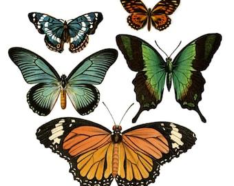 "Vintage Large Butterfly Temporary Tattoos - ""Flutter & Flit"""