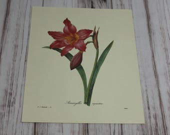 Floral Print, Wall Art, Unframed Art, Vintage, Retro, Red, Cream, Pink, Lilly