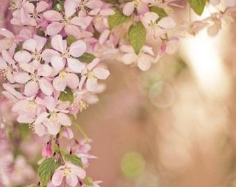 spring floral photograph / pink, flower, bloom, blossom, soft, feminine, blush, gold / pink frame / 8x10