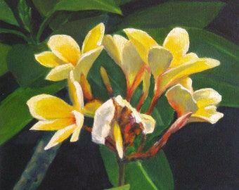Yellow Plumeria, Print, Giclee Floral, Yellow Frangipani Flowers