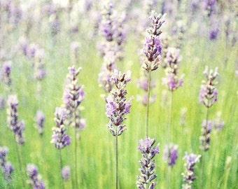 Lavender Field Photograph - Purple Green Wall Art - Flower Nature Print - Peaceful Home Decor