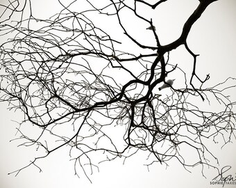 Tree canvas, nature photography, minimalist, black and white photography, canvas print, large wall art, bird in tree, 16x24,24x36,32x48