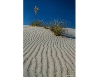 Photograph of Yucca Plants at White Sands National Monument, New Mexico, printed on metal and ready to hang