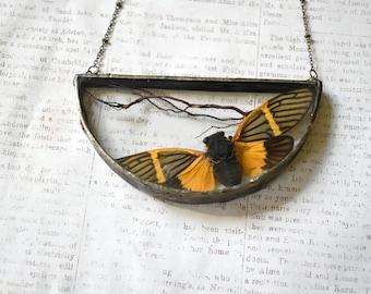 Real Cicada Necklace Boho Jewelry Soldered Pendant Terrarium Jewelry Orange Cicada Pendant Unique Gift Insect Jewelry Macabre Jewelry