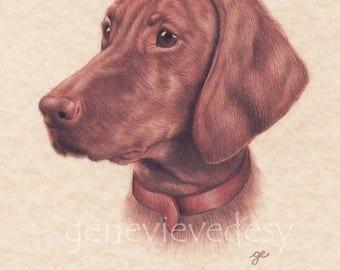 Original drawing of a Vizsla - Dog drawing made colored pencils