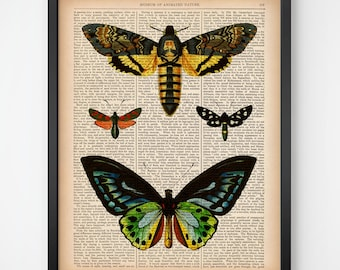 Instant download dictionary print, Butterfly print vintage, Insect art print, Entomology art, Printable antique illustration 8x10, 11x14