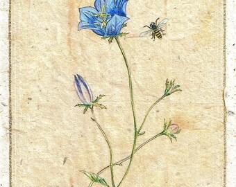 Ink Drawing on teabag, flower painting,teabag art, floral art, Campanula, botanical, garden, Blue Bell