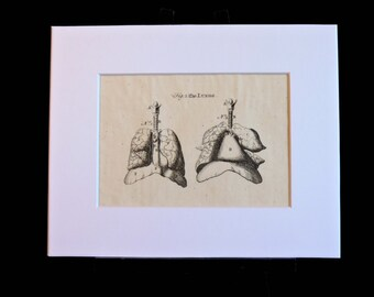 Illustration of the human lungs, medical art, curiosity, macabre, obscure, unusual decor, biology, antique anatomy