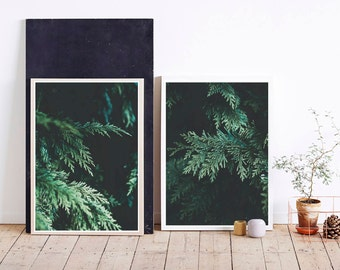 Set of Two Winter, Evergreen tree, forest, nature print photography. Rustic, Scandinavian, modern, photo, poster print. Instant Download.