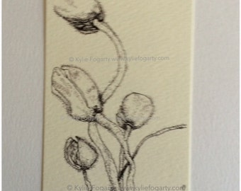 Black and White Poppy Pod Drawing - ACEO - Fine Art Print - Botanical Aceo - Miniature Artwork