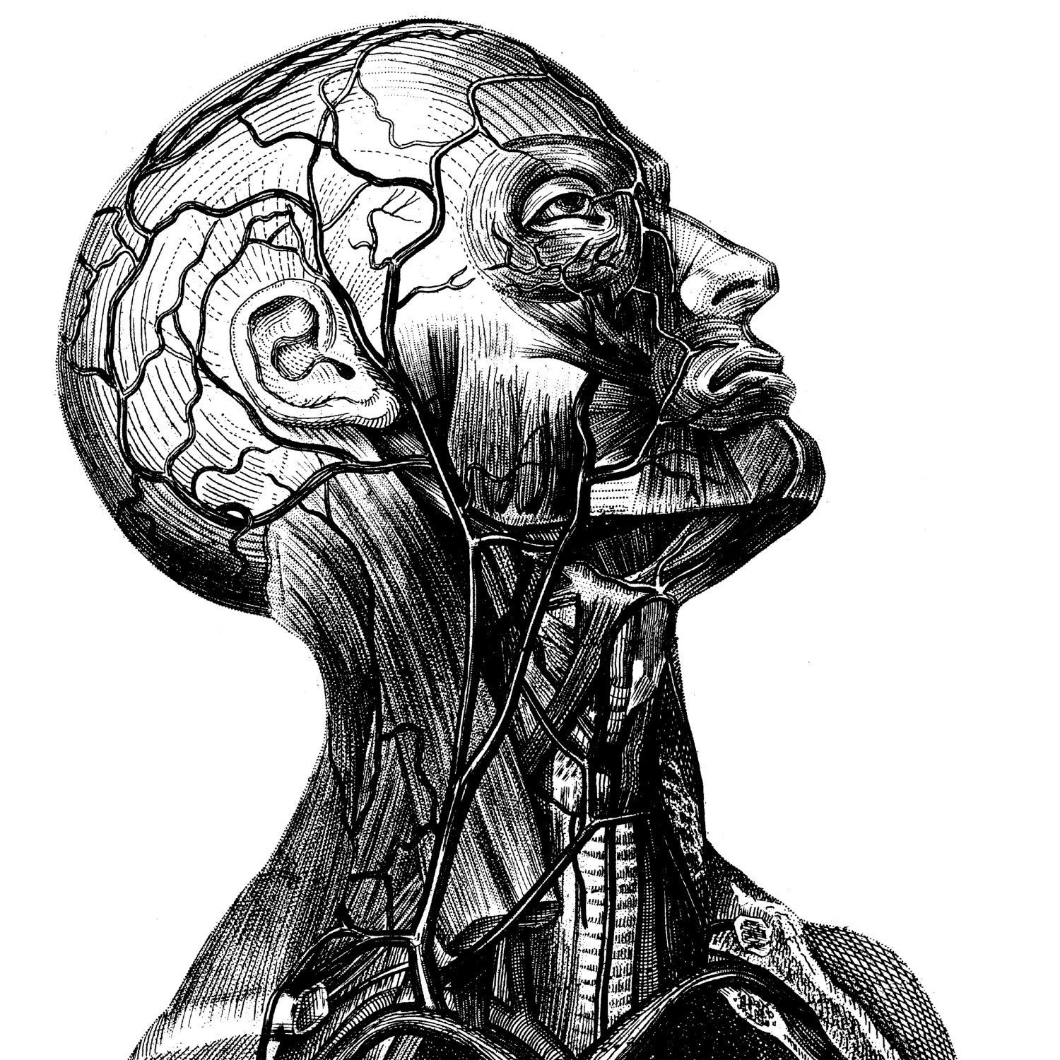 Awesome Old Anatomy Illustrations Pictures - Human Anatomy Images ...