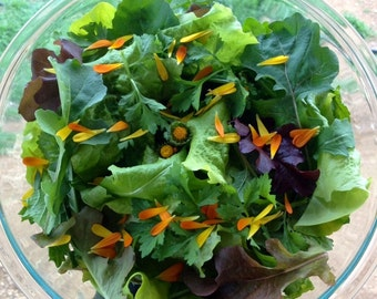 Mendocino Mesclun Greens Mix Exclusive Custom Superfood Romaine Lettuces Salad Mix Seeds