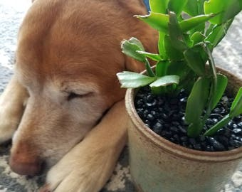 Pet safe! plant of the month club. *monthly subscription box*
