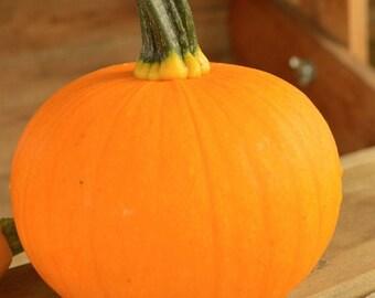 25 Pumpkin Seeds Kandy Korn Plus Pumpkin Candy Corn Pumpkin