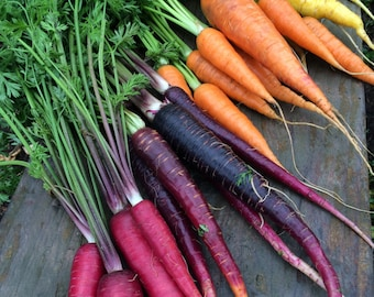Rainbow Carrot Heirloom Seeds Exclusive Custom Mix Grown to Organic Standards