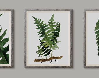 Zestaw paproci, Set of Ferns - illustration - print