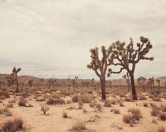 Joshua Tree Photography, California Photograph, bohemian home decor, boho print, nature print, coachella decor, Desert art, travel photo