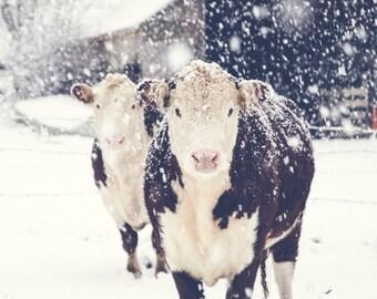 Cow Print, Cow Art, French Country Decor, Farmhouse Decor, Farmhouse Print, Winter Art, Large Wall Art, Rustic Art, Farm, Fine Art Print