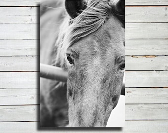 """Close Up - Horse photography - Black and White Horse Photography - 16x24"""" canvas print - Horse art - Horse decor - Equine decor"""