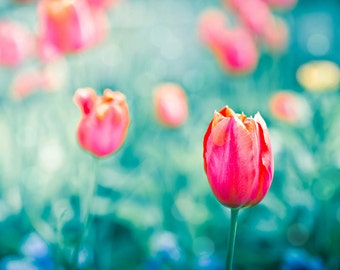 tulips photography flower botanical wall decor 8x10 20x30 fine art photography floral spring decor nursery teal pink art prints summer large