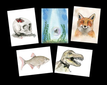 Watercolor Themed Postcard Variety Pack - Featuring 5 paintings by Marcia Furman