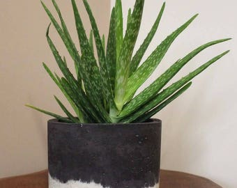 Large Square Black and White Planter