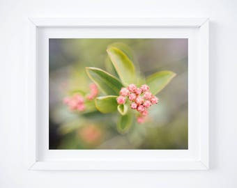 Spring blossom print - Flower art - Pink and green decor - Nature photography - Floral print - Botanical art - Gifts for Moms - Photo gift