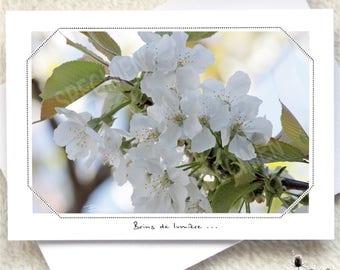 272. My cherry tree in spring.