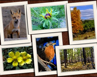6 Nature Photo Note Cards Handmade Set - 5x7 Nature Note Card - Photo Greeting Cards Handmade - Blank Note Cards With Envelope (GP101)