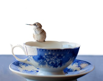 Tea for One i Photographic Print, Hummingbird