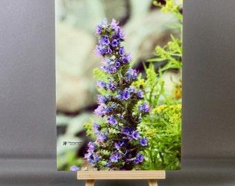 Wild Flowers (5x7)
