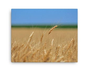 16x20 LowBeeTees Kansas Wheat Head Canvas