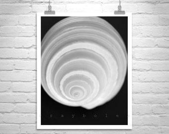 Seashell Print, Black and White Art, Sea Shell Art, Art for Bathroom, Seashell Art, Seashell Picture, Seashell Photo, Home Decor