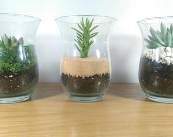 Large Glass Succulent/Cacti Terrarium Kit