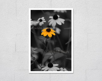 Yellow Wild Flower Black Background Black Eyed Susan Photo, Isolated One Colour Photography Technique Archival Fine Art Print Wall Art