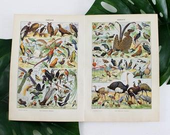 Vintage Birds Poster, Vintage Art Prints, Birds Art Print, Birds Illustration Print, French Dictionary Print, Antique Prints Poster- E362