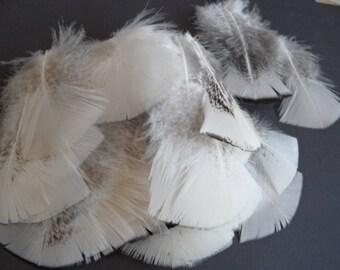 2 white orzak, Native American pow wow, short tail feathers.