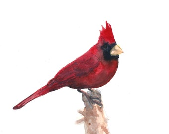 Watercolor Red Cardinal Print 8 x 10