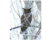 Sale - 10 - Great Horned Owl Blank Note Cards