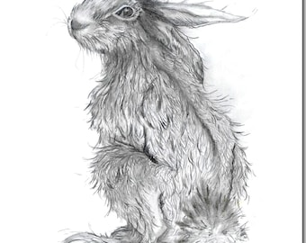 Hector Hare Greeting Card - Blank Inside, Pencil Drawing, Woodland Animal