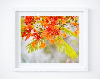 Caribbean art - Orange floral print - Tropical decor - Nature wall art - Bright colorful - Framed art - Photo gift mom - Large photo prints