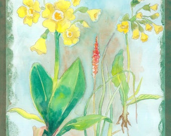 Original botanical Watercolor Flower Nm62 Primrose yellow flowers watercolor