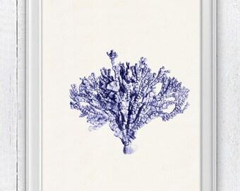 Blue coral no.07 - sea life print - Antique Illustration  Marine  sea life illustration A4 print SWC065