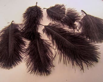 25 OSTRICH dyed black 2 to 5 inches craft feathers