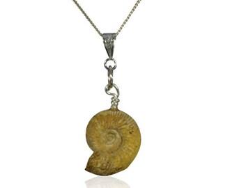 Elegant Whole Fossil Ammonite Necklace