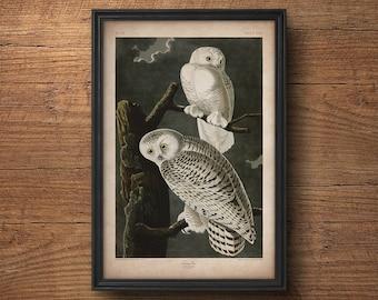 Audubon bird print, Snow owl print, Antique bird print, Audubon print, Birds of America, John James Audubon, Wall art, Wall decor, Large art