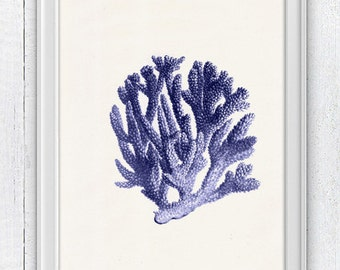 Blue coral no.06 - sea life print - Antique sealife Illustration - Marine  sea life illustration A4 print SWC064