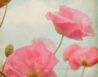 Poppy Flower Photography, Vintage Shabby Chic Wall Art, Pink and Blue, Red Print, Nature Print, Girls Bedroom Decor